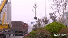 300米见绿 500米见园 新乡市区内将建10至15个街头口袋公园